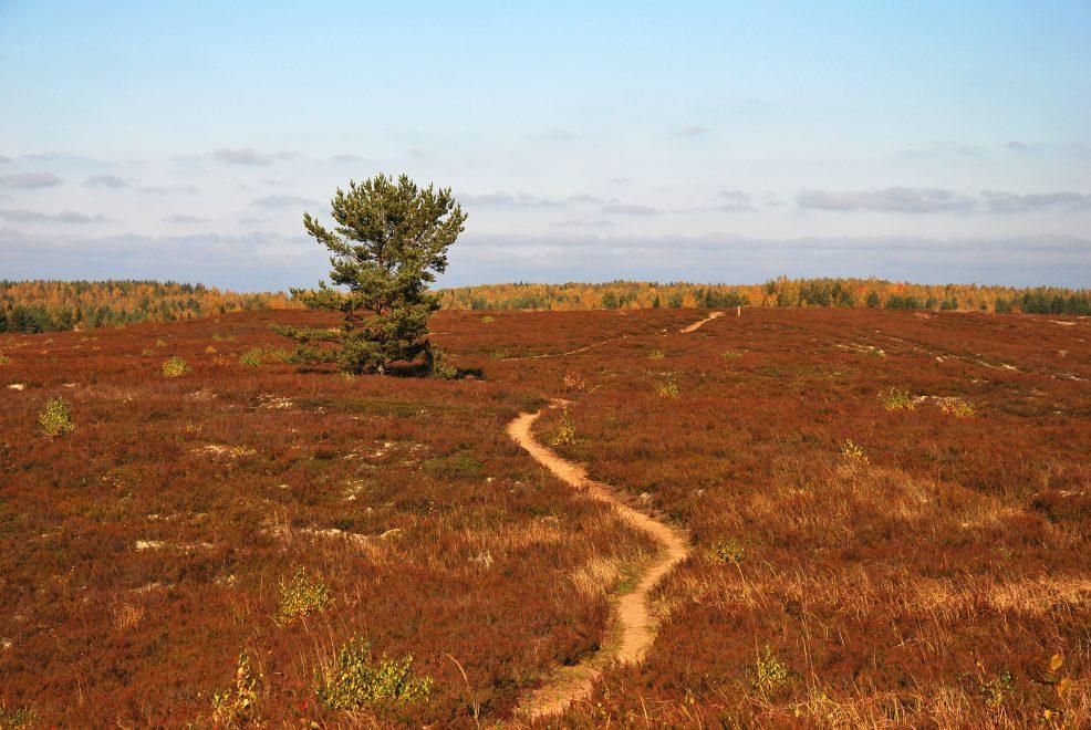 Jussi hiking trail