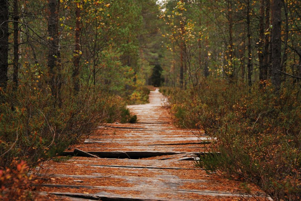 Paunküla bog in autumn