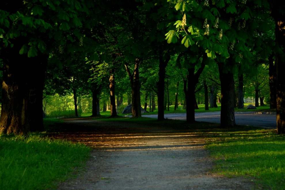 Evening light in the park